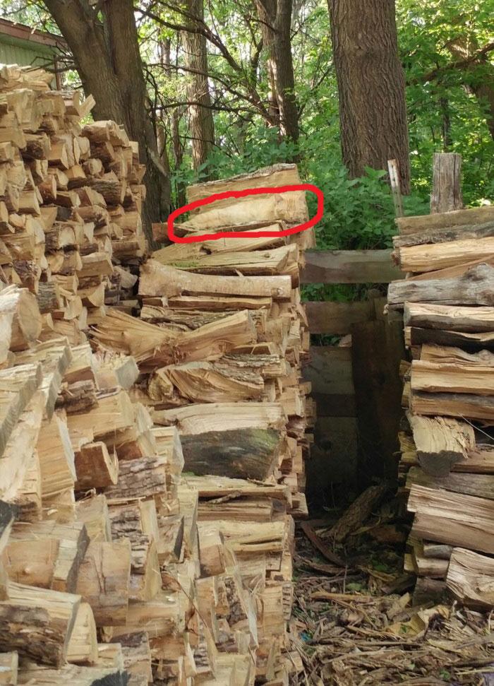 hidden cat wood pile logs (2)