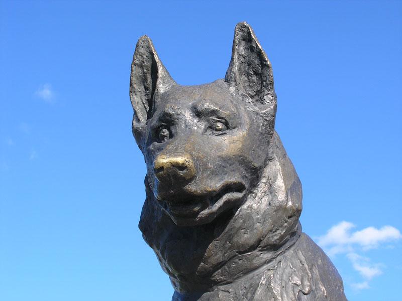 loyal Dog Monument in tolyatti russia (2)