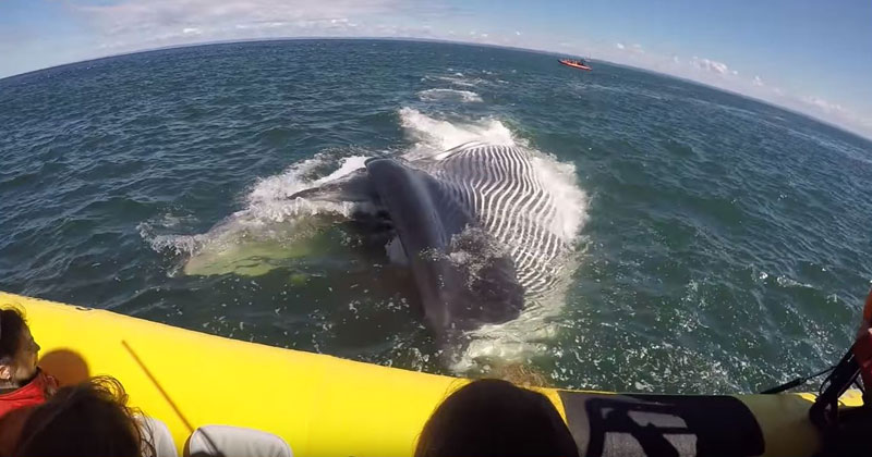 Lucky Whale Watcher Records Extremely Close Encounter with Fin Whale