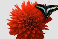 Real-Time Insect Movements Combined With Blooming Flower Timelapses