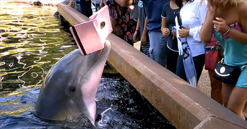Dolphin Steals Woman's iPad; Is Sick of Your Selfies
