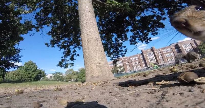 Squirrel Steals GoPro and Takes Viewers on an Intimate Journey Through the Trees