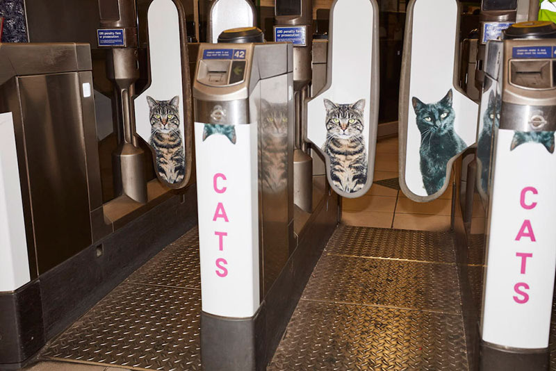 ads replaced with cats in london 1 Citizen Campaign to Replace All Ads with Cats Triumphantly Launches in London