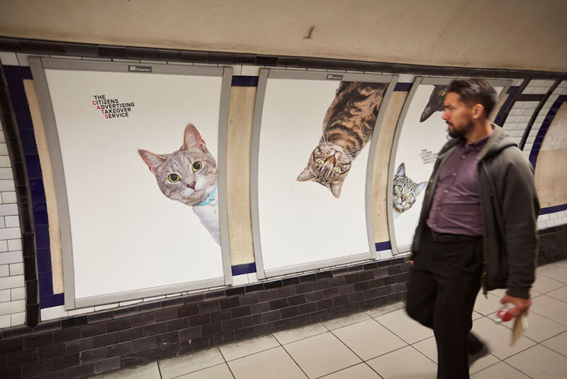ads replaced with cats in london 5 Citizen Campaign to Replace All Ads with Cats Triumphantly Launches in London