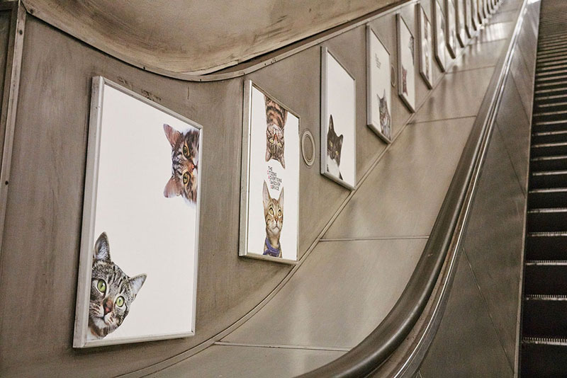 ads replaced with cats in london 9 Citizen Campaign to Replace All Ads with Cats Triumphantly Launches in London