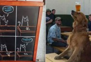 The Shirk Report – Volume 388