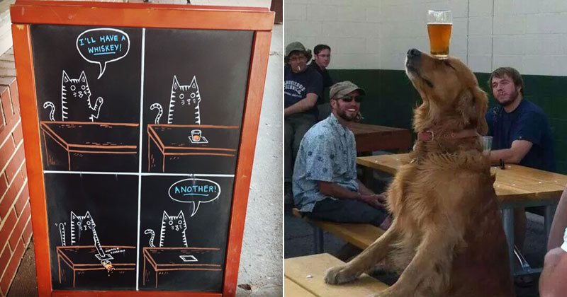 cheers1 The Shirk Report – Volume 388