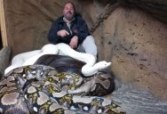 Guy Can't Stop Laughing at Giant Python Casually Attacking Him