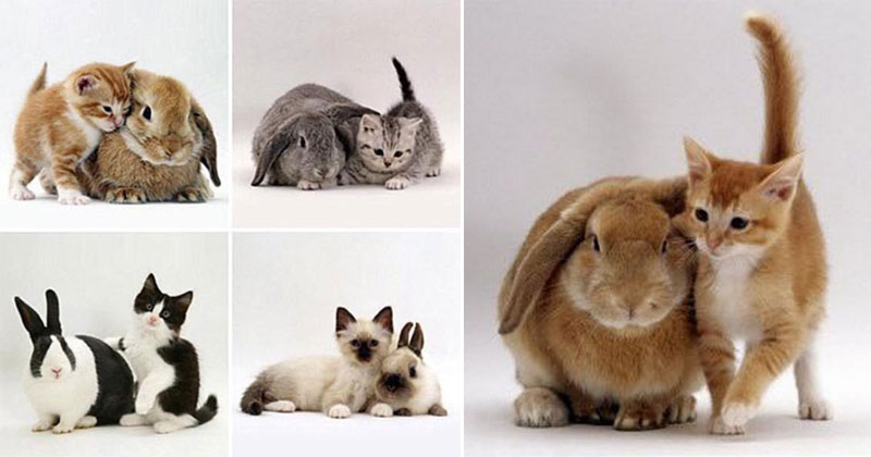 kittens and their matching bunnies 7 Kittens and their Matching Bunnies