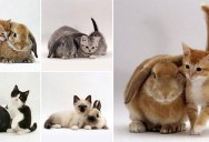 Kittens and their Matching Bunnies