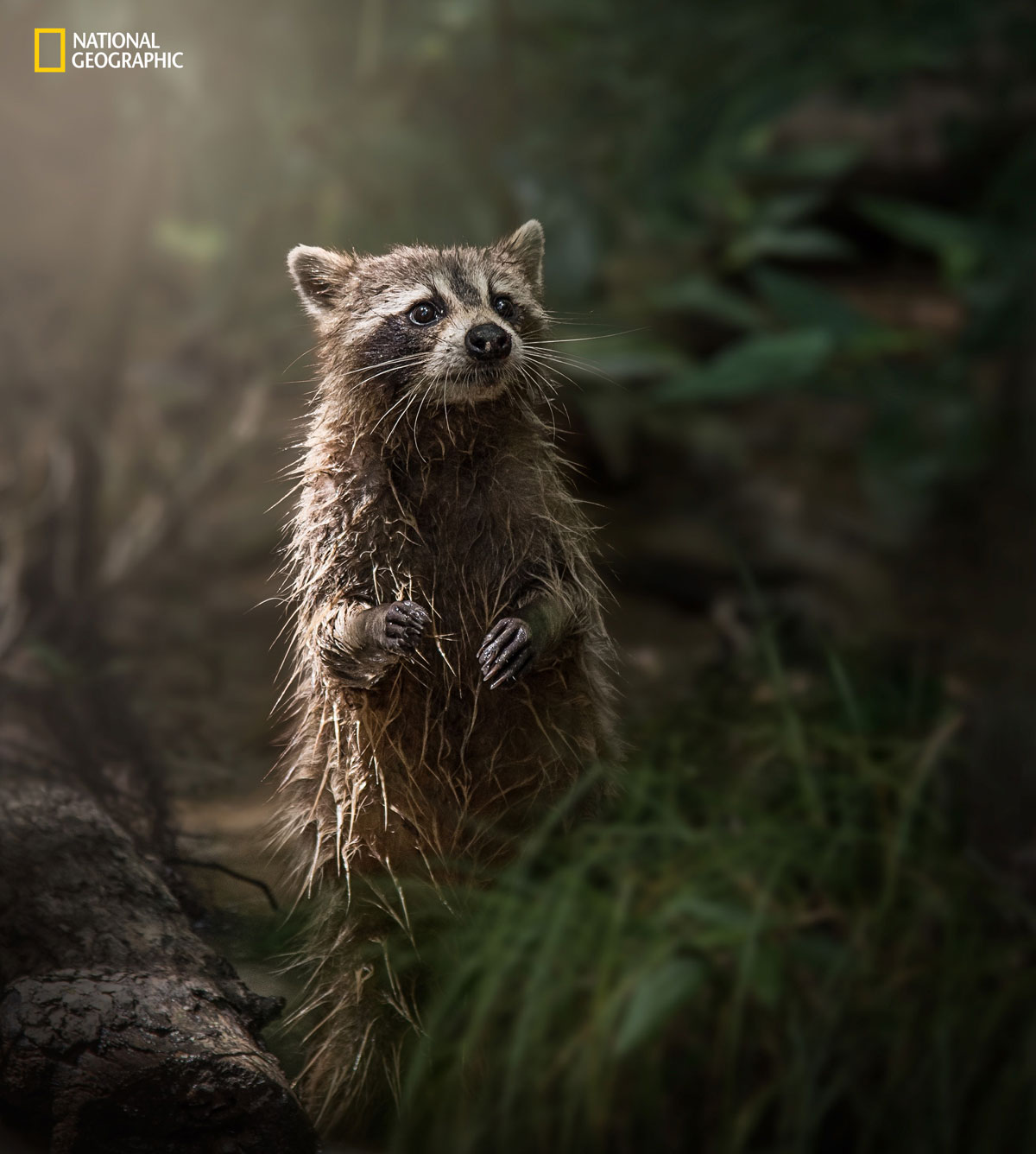 prod yourshot 1334436 8476443 The 2016 National Geographic Nature Photographer of the Year Contest (15 Highlights)