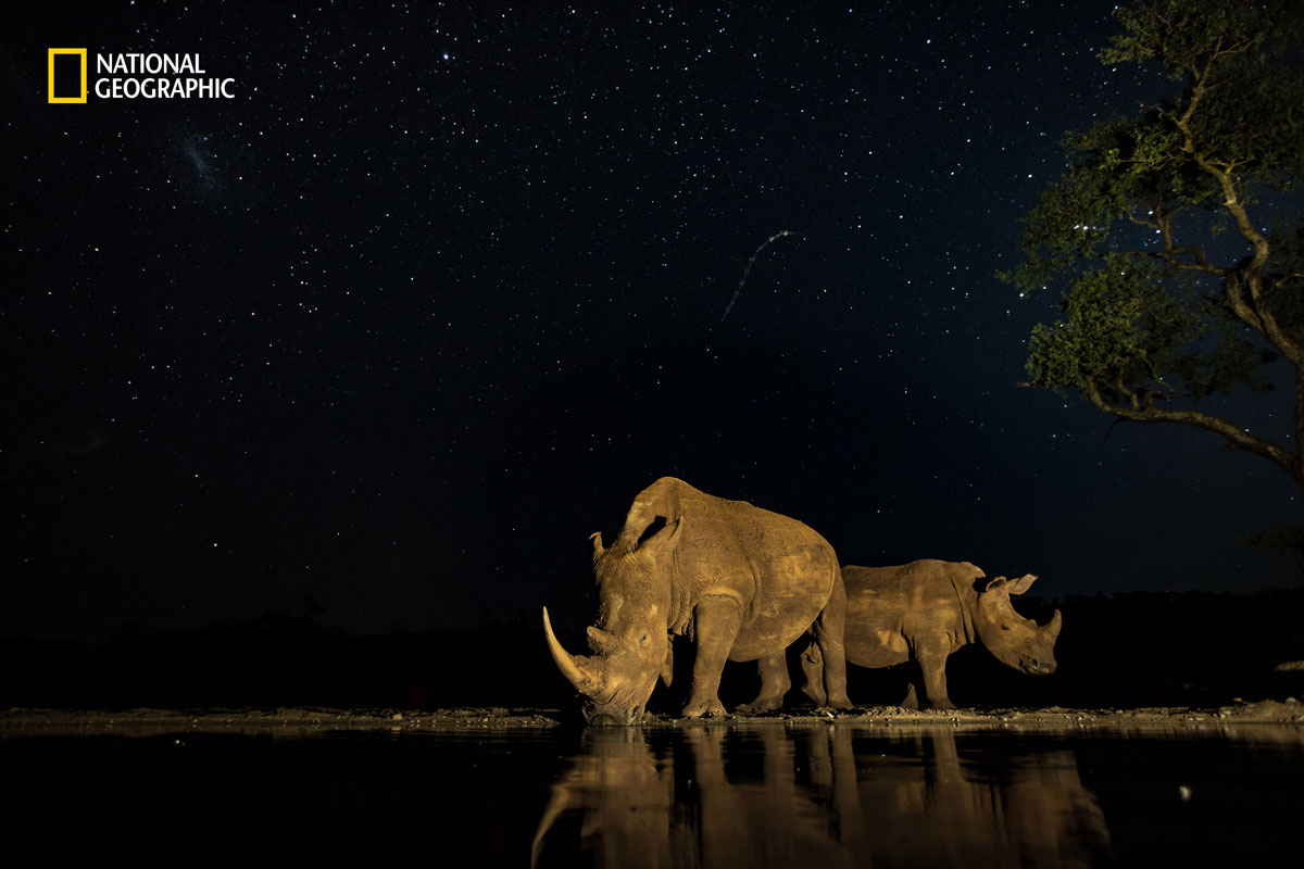 prod yourshot 171690 8819214 The 2016 National Geographic Nature Photographer of the Year Contest (15 Highlights)