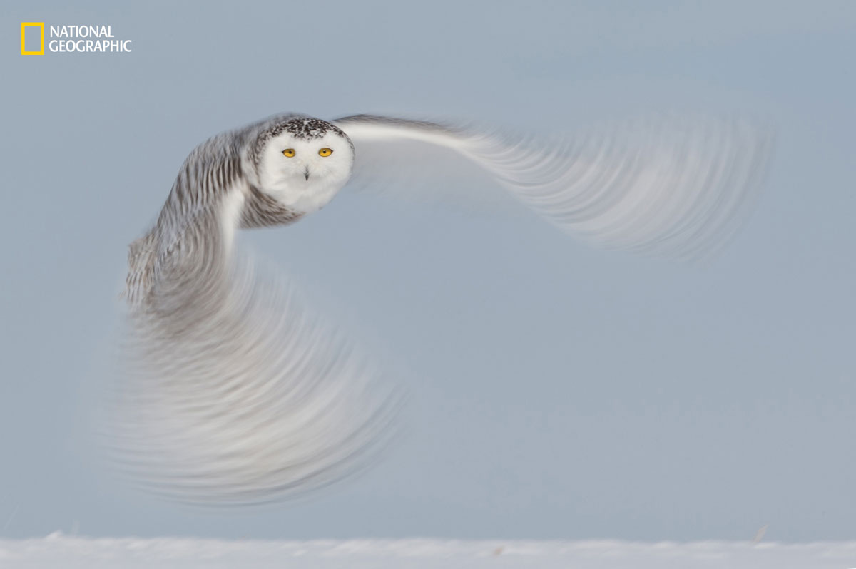 prod yourshot 266943 8828411 The 2016 National Geographic Nature Photographer of the Year Contest (15 Highlights)