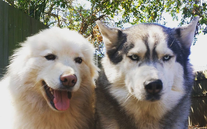 two types of photo takers happy dog mad dog The Shirk Report – Volume 385
