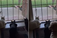 Vid Perfectly Sums Up Difference Between Cats and Dogs