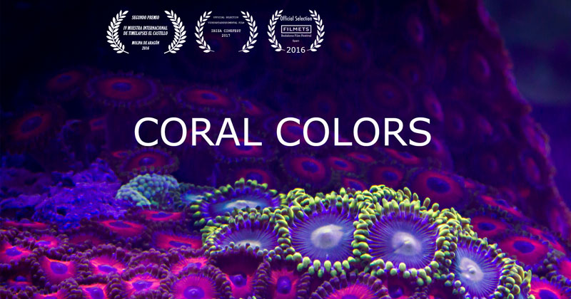 This Coral Timelapse Took One Year and 25,000 Photos to Create