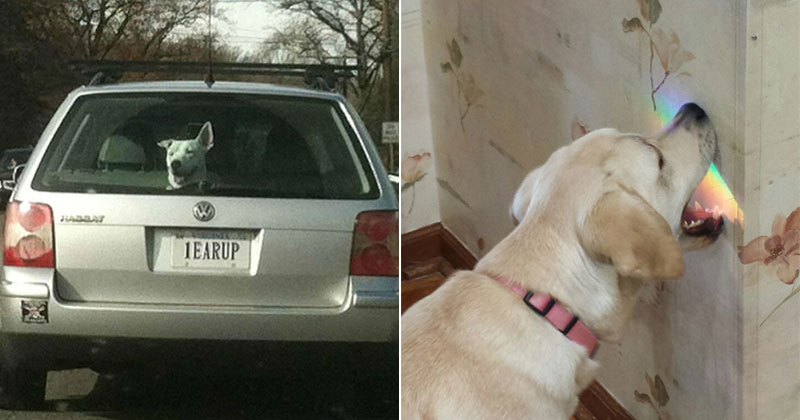 dogs are the best The Shirk Report – Volume 391