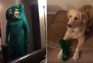 Guy Dresses Up as His Dog's Favorite Chew Toy and Amazingness Ensues