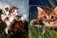Just a Gallery of Kittens Mid-Pounce