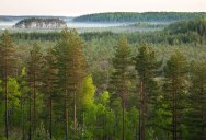 Picture of the Day: Seeing the Forest for the Trees