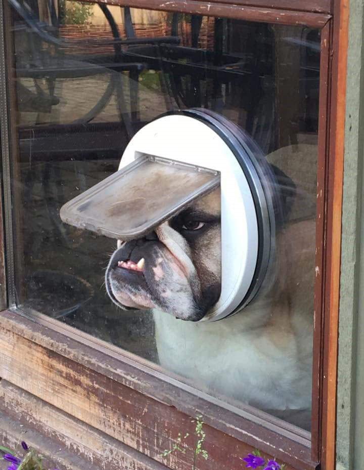 dog looking out cat door The Shirk Report – Volume 395