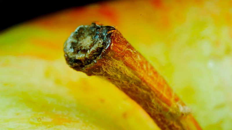 Objects In Macro: Can You Identify Them Before the Camera Zooms Out?