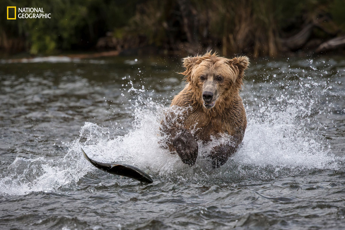 prod yourshot 1394413 9178241 15 Highlights from the 2016 National Geographic Nature Photographer of the Year Contest