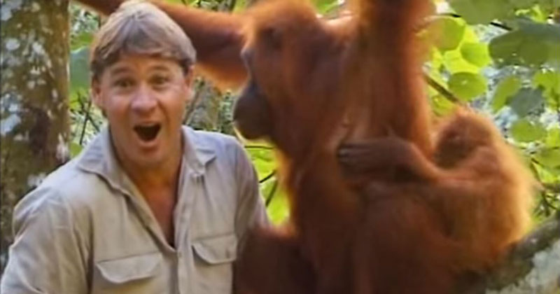 Remembering Steve Irwin's Incredible Encounter with an Orangutan Mom and Her Baby