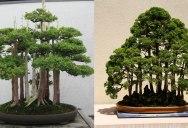 15 Beautiful Bonsai Forests