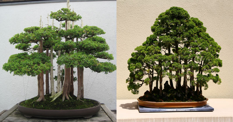 15 Beautiful Bonsai Forests