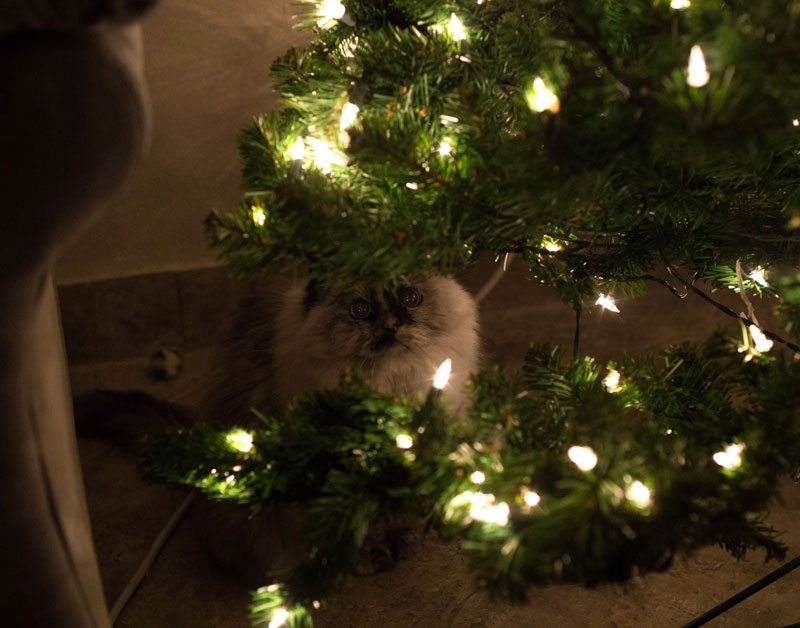 cats that cant believe its christmas 1 Cats That Cant Believe Its Christmas