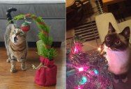 Cats That Can't Believe It's Christmas