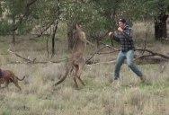 Guy Saves Dog By Punching Kangaroo in the Face
