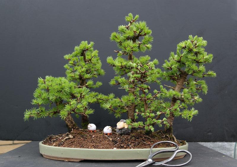 miniature bonsai forests 11 15 Beautiful Bonsai Forests