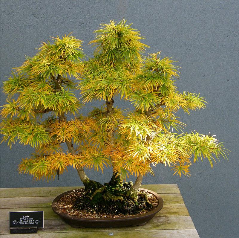 miniature bonsai forests 12 15 Beautiful Bonsai Forests