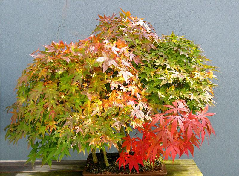 miniature bonsai forests 14 15 Beautiful Bonsai Forests