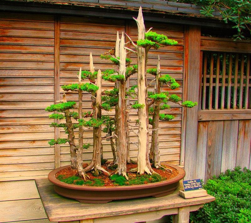 miniature bonsai forests 16 15 Beautiful Bonsai Forests