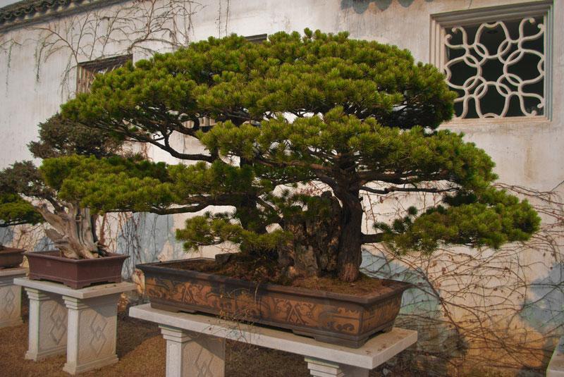 miniature bonsai forests 4 15 Beautiful Bonsai Forests