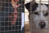 Rémi Gaillard Locks Himself in Cage for 87 Hours, Raises €200,000 and Gets 200 Dogs Adopted