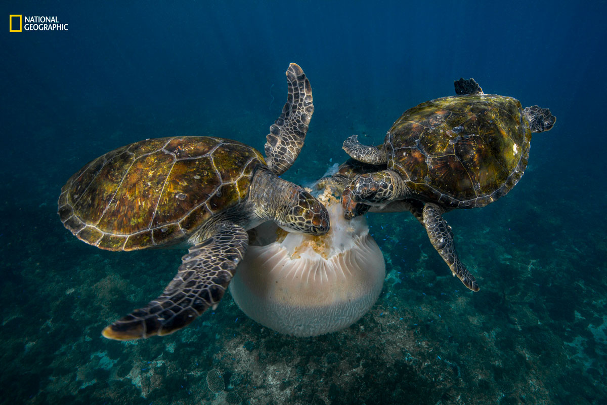 scott portelli ngnp actionhm The Winners of the 2016 National Geographic Nature Photographer of the Year Contest
