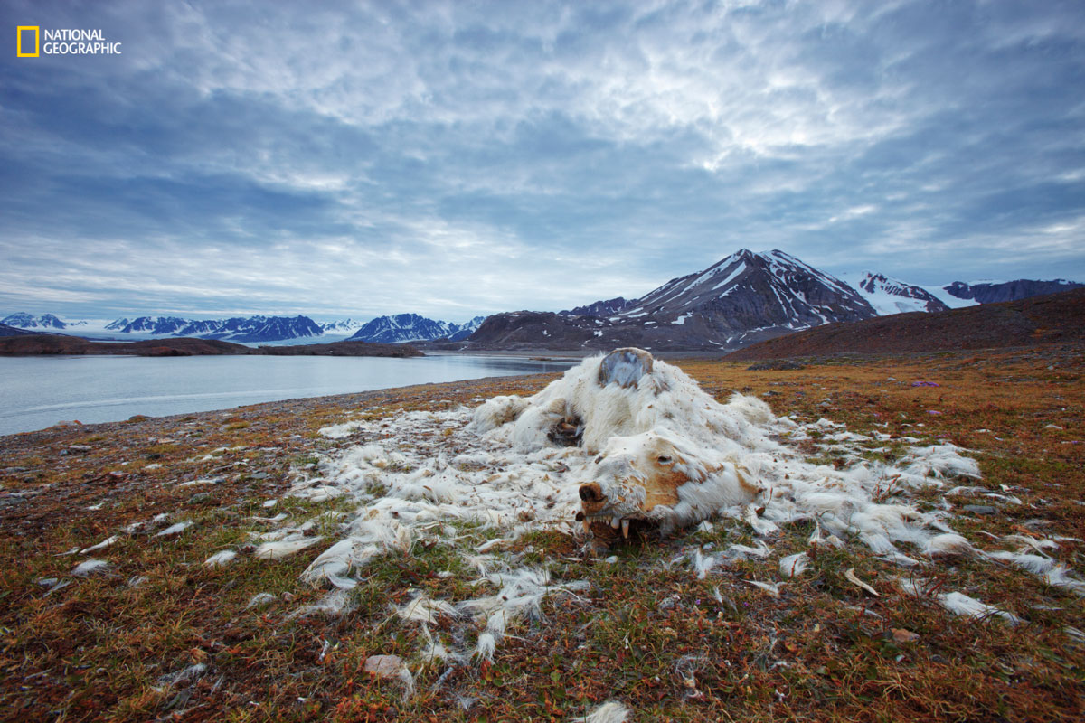 vadim balakin ngnp environmental1 The Winners of the 2016 National Geographic Nature Photographer of the Year Contest