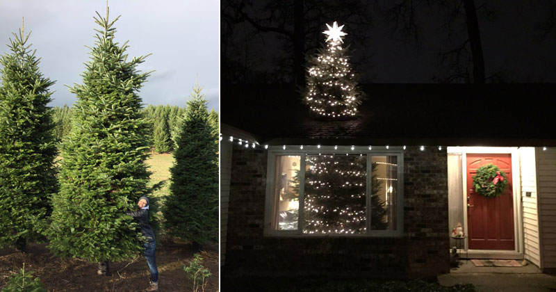 we bought a 20 ft christmas tree and cut it in half so it goes through the roof 1 We Bought a 20 ft Christmas Tree and Cut It In Half So It Goes Through the Roof