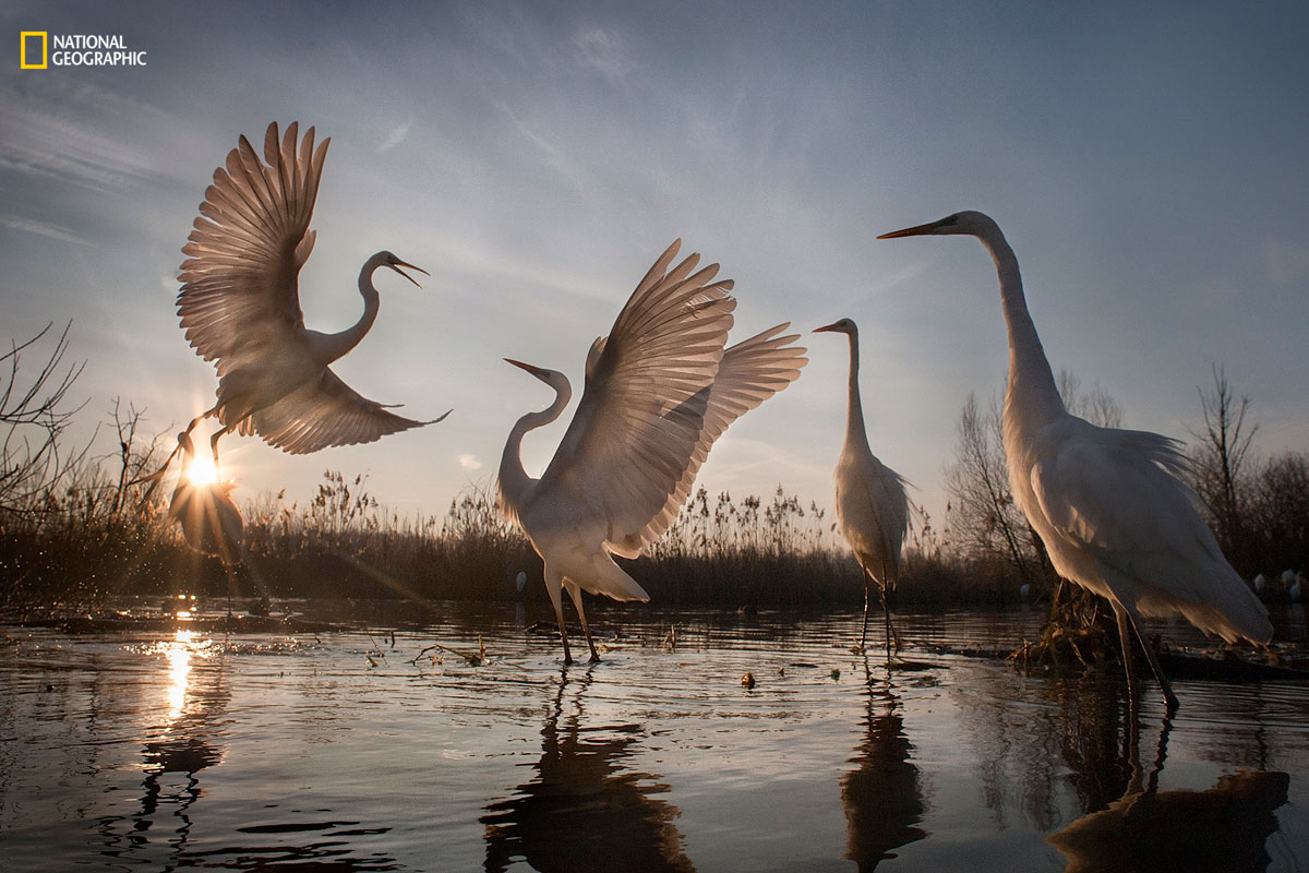 zsolt kudich ngnp action3 The Winners of the 2016 National Geographic Nature Photographer of the Year Contest