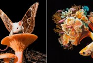 Contemporary Chimeras by Lisa Ericson