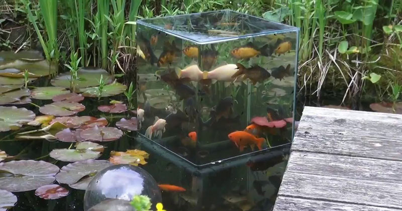 DIY Fish Tower and Silky Smooth Jazz