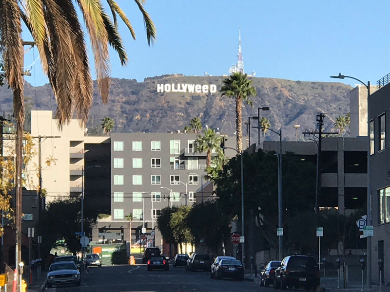 Picture of the Day: Welcome to Hollyweed