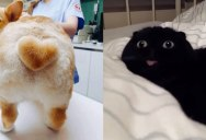 The Shirk Report – Volume 403