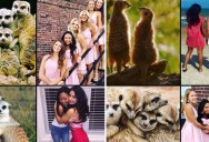 Someone Noticed Sorority Sisters Pose Like Meerkats and There are Photos to Prove It