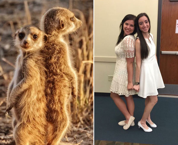 sorority sisters posing like meerkats 2 Someone Noticed Sorority Sisters Pose Like Meerkats and There are Photos to Prove It