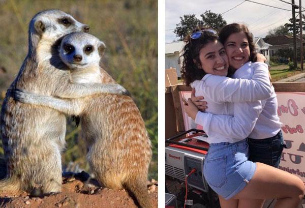 sorority sisters posing like meerkats 4 Someone Noticed Sorority Sisters Pose Like Meerkats and There are Photos to Prove It